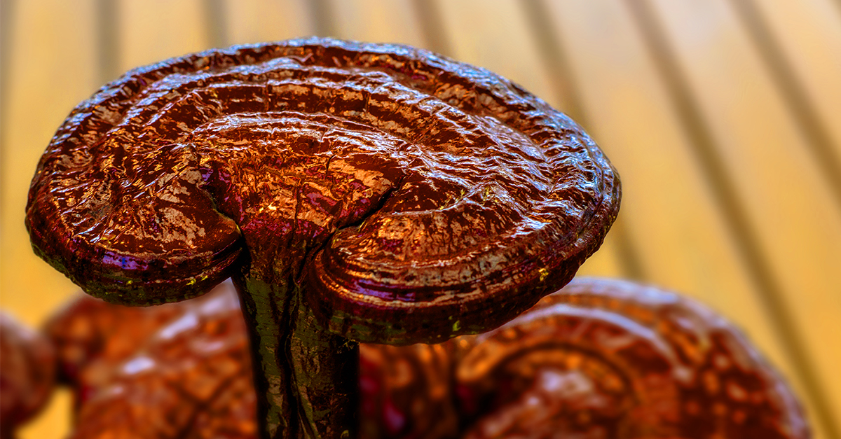 Ganoderma_Blog_Image1