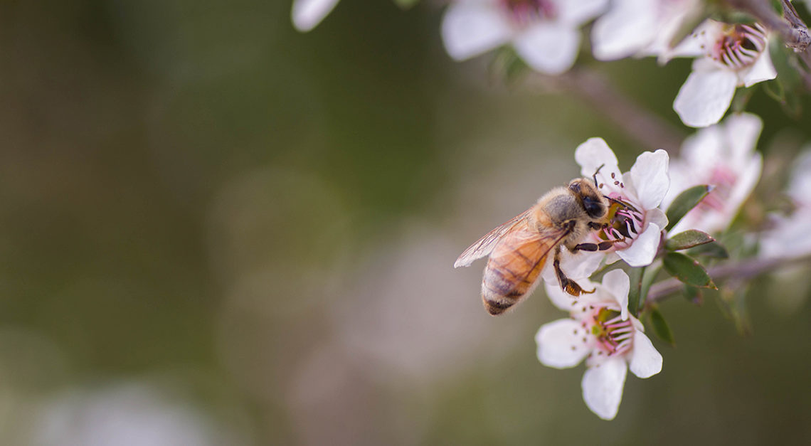 The Many Benefits of Bee Venom For Your Skin